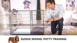 Sussex Spaniel Potty Training from WorldFamous Dog Trainer Zak George  Train Sussex Spaniel Puppy