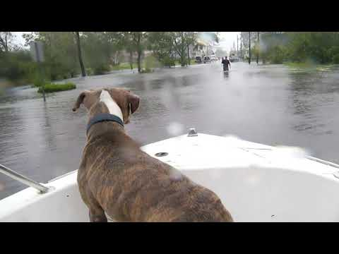 Dogs, cats rescued by boat in Jacksonville, NC