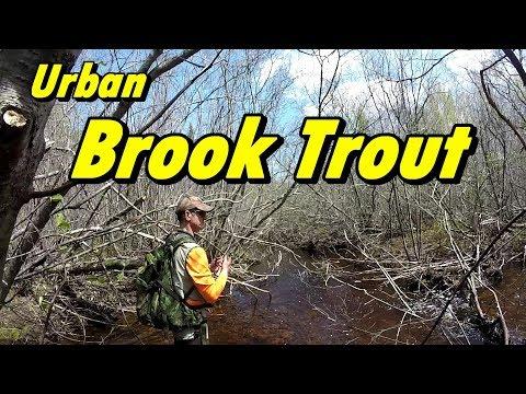Urban Brook Trout Fishing New Brunswick Canada-2019