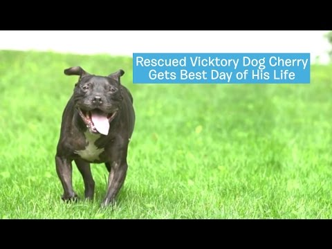 Dog's Best Day - Cherry