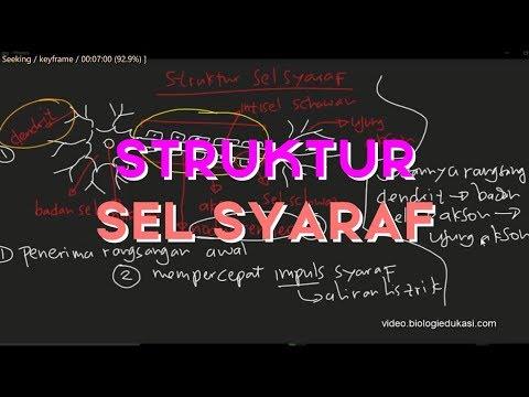 Sistem Saraf Manusia, Struktur dan Anatomi Sel Saraf