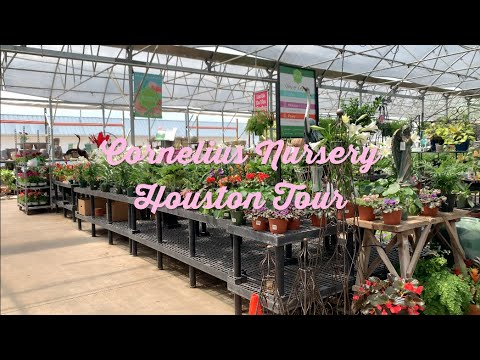 Cornelius Nursery Tour Houston
