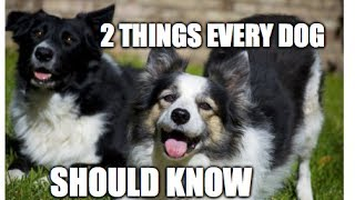 The 2 Most Important Things Every Dog Should Know