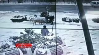 Elazığ'da Soğukta Kalan Köpeği Gördü Ve…