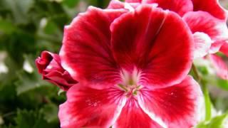 fiori, foto marco possieri