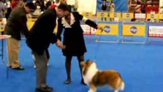 Shanna In Mexico World Dog Show 2007