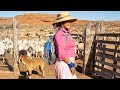 Voices of Bears Ears — Ep. 3: The Navajo