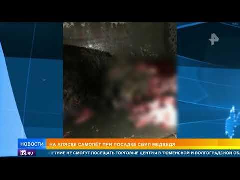 Самолет насмерть сбил медведя во время посадки в аэропорту