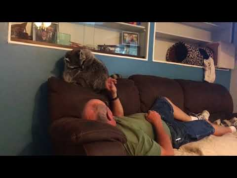 Dolly raccoon plays with daddy and Sally dog