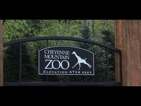 Flying Whale Sharks?!?!Cheyenne Mountain Zoo Vlog Pt.1!