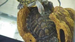 My Turtles