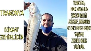 🇹🇷 #Atçek Oltası İle Akdeniz'in #Zehirli #Balıklarından #Trakonya Yakaladım S04B