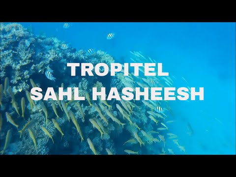 snorkeling-tropitel-sahl-hasheesh-hurghada---sj4000-the-gopro-alternative---house-reef-north