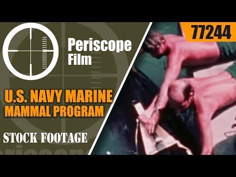 U.S. NAVY MARINE MAMMAL PROGRAM PILOT WHALE TORPEDO RECOVERY 77244