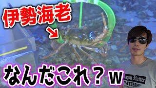 【伊勢海老キャッチャーww】1万円以内で高級食材が取れるのか?【サブマリンキャッチャー】