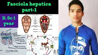 fasciola hepatica tratament