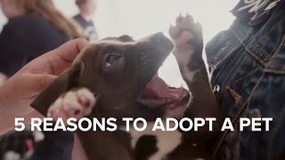 5 Reasons to Adopt a Pet thumbnail