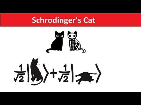 Schrodinger's Cat Explained in Hindi - Quantum Physics ...