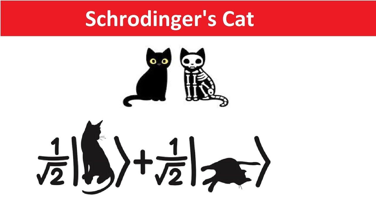 schrodinger s cat explained