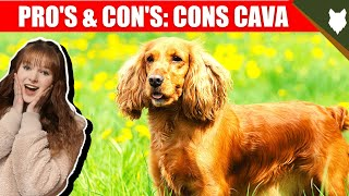 CAVALIER KING CHARLES SPANIEL! Why Are They GOOD! Why Are They BAD!