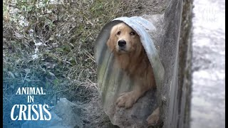 Dog Fearing People Hid In Sewer Pipe Until He Could Starve To Death (Part1) | Animal in Crisis EP195