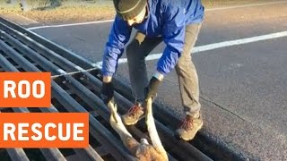 Good Samaritan Rescues Baby Kangaroo | Good On Ya Mate