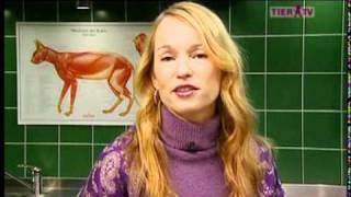 Artgerechten Haltung von Hauskatzen Birga Dexel