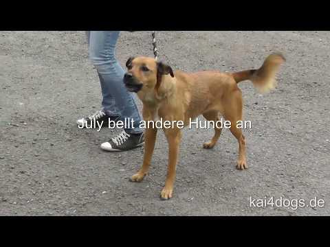 Problemhund-Sprechstunde Mai 2017