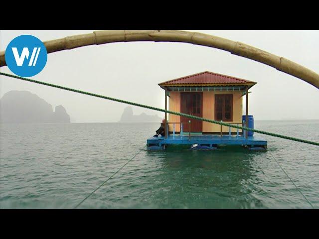 Die schwimmenden Dörfer der Ha Long Bucht (360° - GEO Reportage)