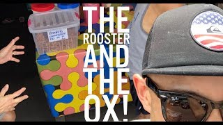 Ox Rooster and