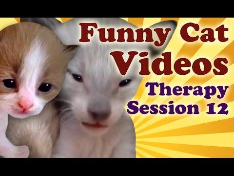 Cute Kittens: Cute Kitten Vines of Furry Little Kittens, Funny Cat Videos Therapy 12