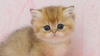 Смешное про животных Приколы с котами Видео про котов Кошки Создай себе хорошее настроение