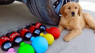 Crushing Crunchy & Soft Things By Car! Puppy EXPERIMENT: Car vs Coca Cola and Balloons