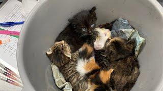 5 Kittens Were Dropped Off in a Bucket | Pet Alliance TikTok Videos