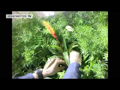 Mur v g tal int rieur vg tal3design dans c t jardin doovi - Cadre vegetal jardiland ...