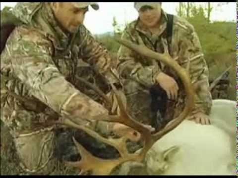 Moose/Caribou Hunt RHF P1