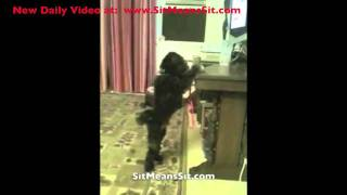Dog Loves His Sit Means Sit Dog Training Remote Collar