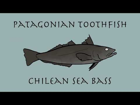 Patagonian Toothfish - Fishy Project