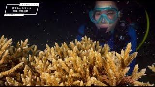 ミスワリン#沖縄サンゴ保全プロジェクト#南の島のミスワリン#サンゴ#珊瑚#沖縄#恩納村 ミスワリンTwitter:https://twitter.com/misswarin ...