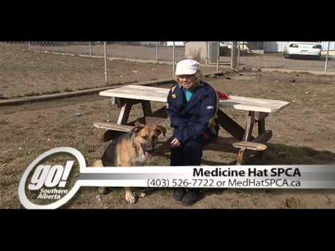SPCA - A Dog Walking A Dog
