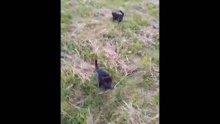 Черные котята - брошенки...