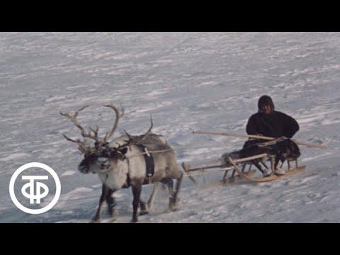 Человек и Север. Рассказывает академик В.Казначеев (1985) - YouTube 57c6375d5bc