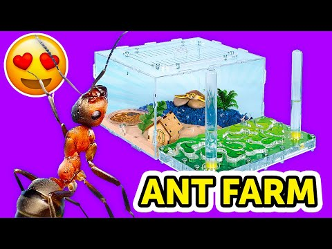 Building An ANT FARM AT HOME || How To Build an Ant Farm And Make Ants Happy