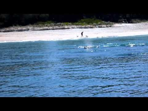 Sea Kayaking with Dolphins