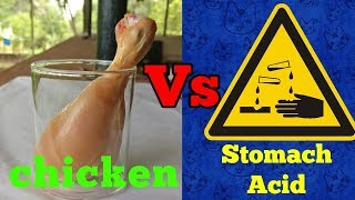 Hydrochloric acid Vs Chicken leg-Acidified series 1-Hallucinate me!