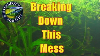 33 gallon aquarium breakdown part 1 super red bristlenose eggs getting ready for cyps multis