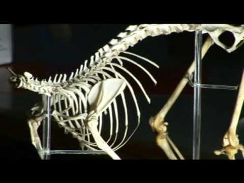 The Link - Darwinius Masillae - Ida (18 of 30) ORKUT Community and Profile
