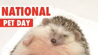 National Pet Day 2018   Funny Pet Video Compilation