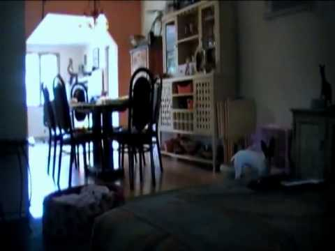 Paranormal Activity: A Fan Movie