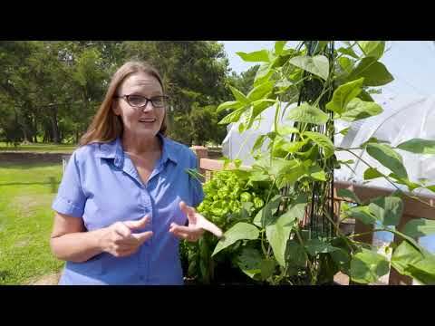 August Horticulture Tips